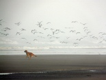 Baxter and the Birds by Vurnman