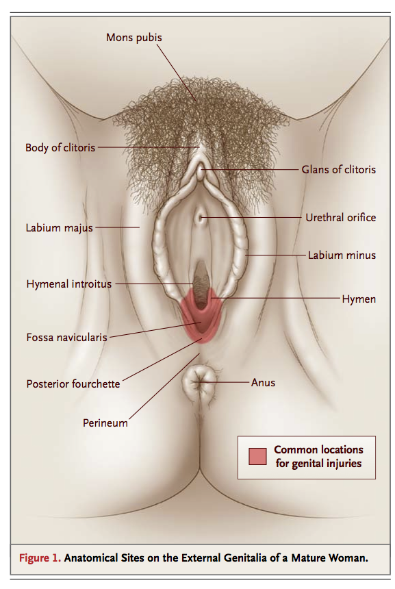 Picture of vulva and its part remarkable, rather